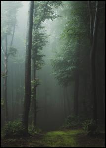 Lagervaror egen produktion Mysterious forest Poster