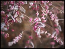 Bildverkstad Blomma Närbild
