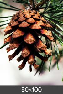Egen tillverkning - Kundbild Vergrößerung FineArt Bamboo 290 g