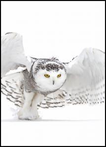 Bildverkstad Snowy Owl Jazz Wings