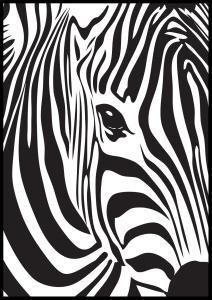 Bildverkstad Zebra Poster
