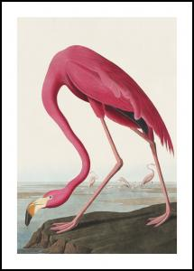 Lagervaror egen produktion American Flamingo Poster