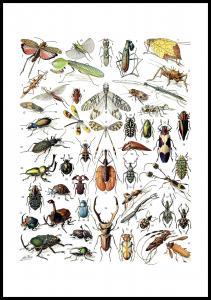 Lagervaror egen produktion Schule Insekten II Poster