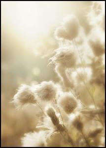 Lagervaror egen produktion Fluffy flowers Poster