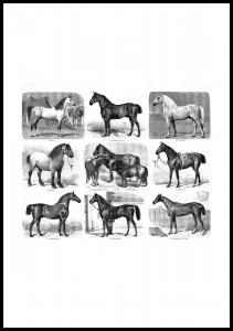 Bildverkstad Pferderassen Poster