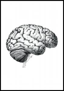 Lagervaror egen produktion Schule Gehirn Poster