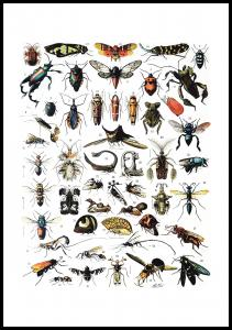 Lagervaror egen produktion Schule Insekten I Poster