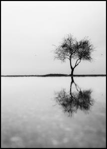 Bildverkstad Lonely Tree Reflection