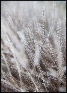 Bildverkstad Frosty Grass Poster