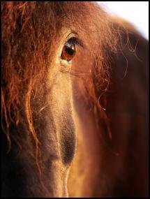 Bildverkstad Horse sunset