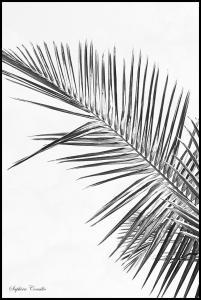 Bildverkstad Black palm Poster