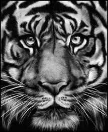 Bildverkstad TIGER Poster