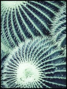 Love Home Round Cactus