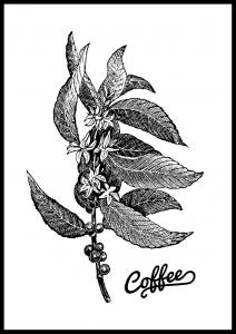 Bildverkstad Coffee Botanical